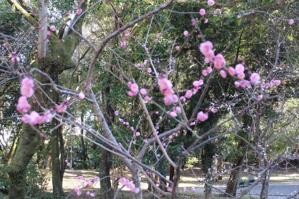 春目前、最近の「プチ幸せ」